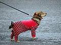 Look at my pajama (2246683807).jpg