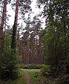 Lost in the woods - geograph.org.uk - 250836.jpg