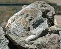 Lystrosaurus Skull (31940258744).jpg