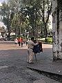 Músico en Coyoacán.jpg