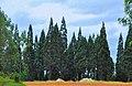 MERANE Forest 01.jpg