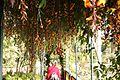 Madeira - Pergola Madeira Botanical Garden - Ann (33408535541).jpg