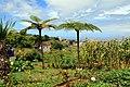 Madeira Santana view on sea 2016 1.jpg