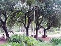 Mahavir Garden Kolhapur - panoramio (1).jpg