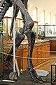 Mandschurosaurus Amurensis..2H1A0376WI.jpg