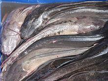 Walking catfish - Wikipedia