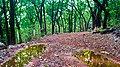 Matheran in August2012 - panoramio (1).jpg