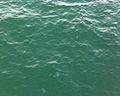 Meduses al pont del petroli.jpg