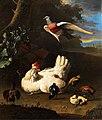 Melchior d Hondecoeter Federvieh.jpg