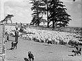 Men with dogs herding sheep inside a pen (AM 80931-1).jpg