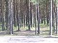 Metsatukk TTÜ ees - panoramio.jpg