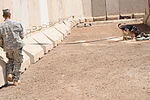 Military Working Dogs training in Baghdad, Iraq DVIDS173829.jpg