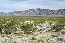 The Mojave Desert Covers Much Of The Southwestern United States Stretching From Nevada Into California Arizona And Utah