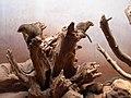 Mongooses (117526091).jpg
