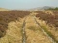Moorland Track - geograph.org.uk - 405870.jpg