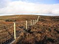 Moorland fencing - geograph.org.uk - 290475.jpg