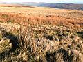 More moorland - geograph.org.uk - 669394.jpg