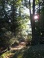 Morning Light, Swiss Wish - geograph.org.uk - 1508590.jpg