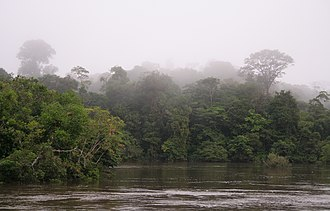 The Coppename river, one of many rivers in the interior Morning fog (2719242329).jpg