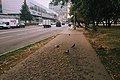 Moscow, Kosmonavta Volkova Street 14 and 12 (21256010471).jpg