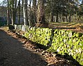 Mossy wall and ditch - geograph.org.uk - 620568.jpg