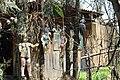 Muñecas en troncos.JPG
