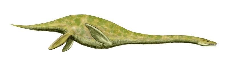 Muraenosaurus BW