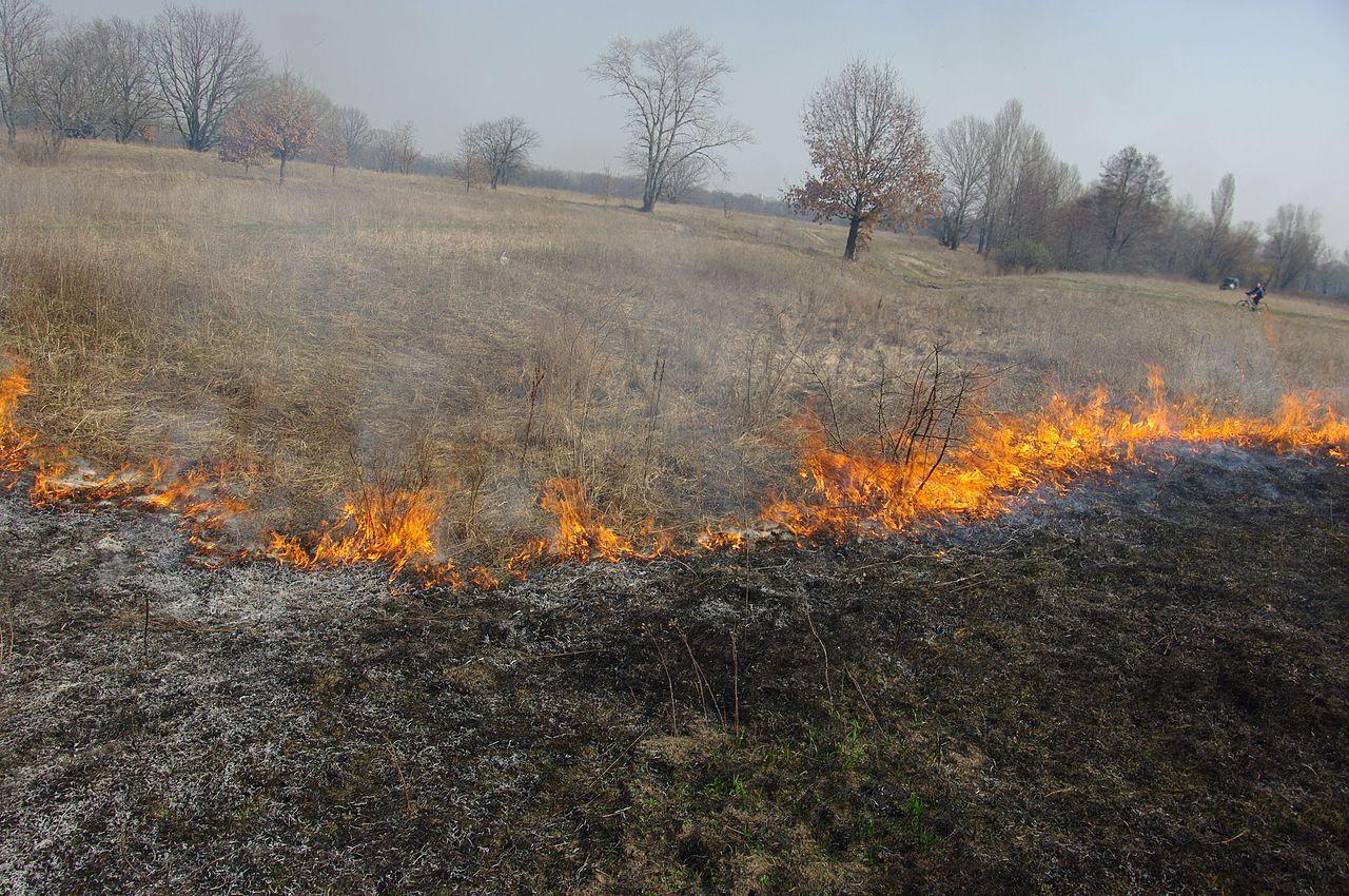 Vypaľovanie trávy