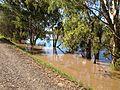 Murrumbidgee River in major flood, viewed from the levee.jpg