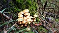 Mushroom on Swedish forest floor 21.jpg