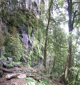 Point Lookout (New South Wales) - The escarpment, Point Lookout