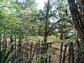 Nairobi Arboretum Park 33.JPG