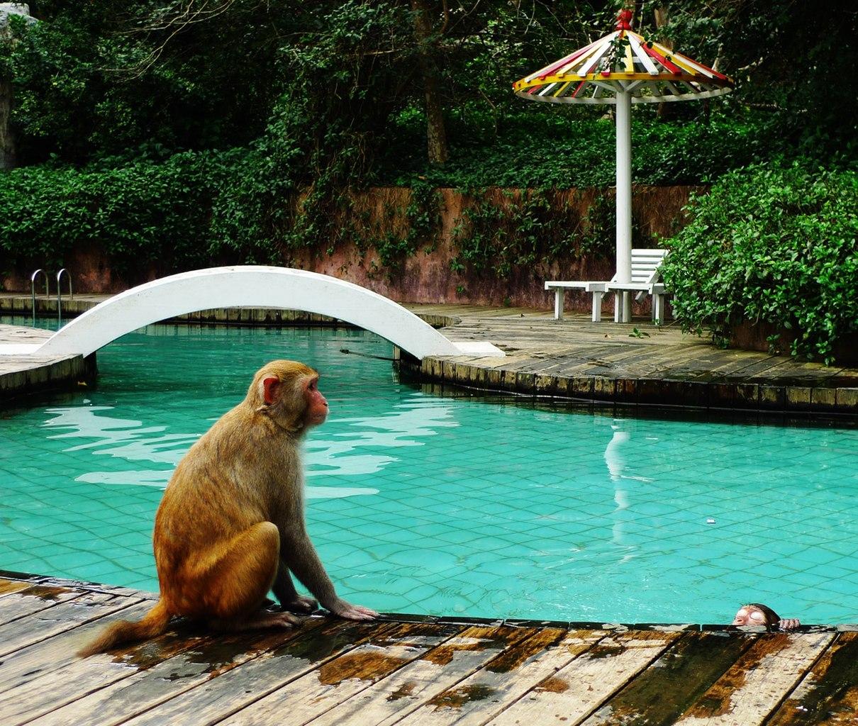 Monkey Island  Losung