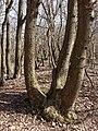 Nationaal Park Kennemerland (39559893740).jpg