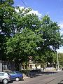 Naturdenkmal 671 201207-18 3709 Wien19 Strassergasse Stieleiche GuentherZ.jpg
