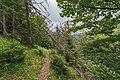 Naturschutzgebiet Feldberg (Black Forest) - Alpiner Steig am Feldberg - Bild 02.jpg