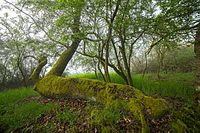 Naturschutzgebiet Grohberg 02.jpg