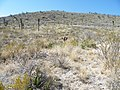 Near Ranch San Rafael, Nuevo Leon (5710442315).jpg