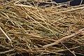Needle in haystack7.jpg