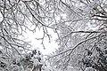 Neige à Saint-Rémy-lès-Chevreuse le 7 février 2018 - 02.jpg