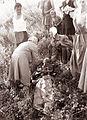 Nesreča motorista v Viltušu 1961.jpg