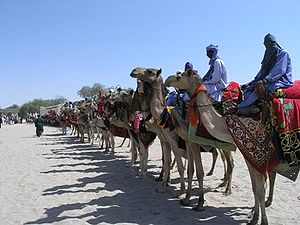 Camel riders line up outside the residence of the traditional chief of Nguigmi