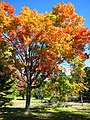 Niagara colours (15545210940).jpg