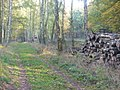 Nikolskoe - Waldweg (Woodland Path) - geo.hlipp.de - 29861.jpg