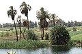 Nile Esna Edfu 13.jpg