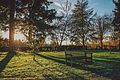 Nonsuch Park bench and trees in Surrey.jpg