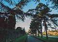 Nonsuch Park trees - Surrey - 6 December 2014.jpg