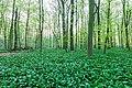 Nordkirchen, Naturschutzgebiet Ichterloh -- 2018 -- 2051.jpg