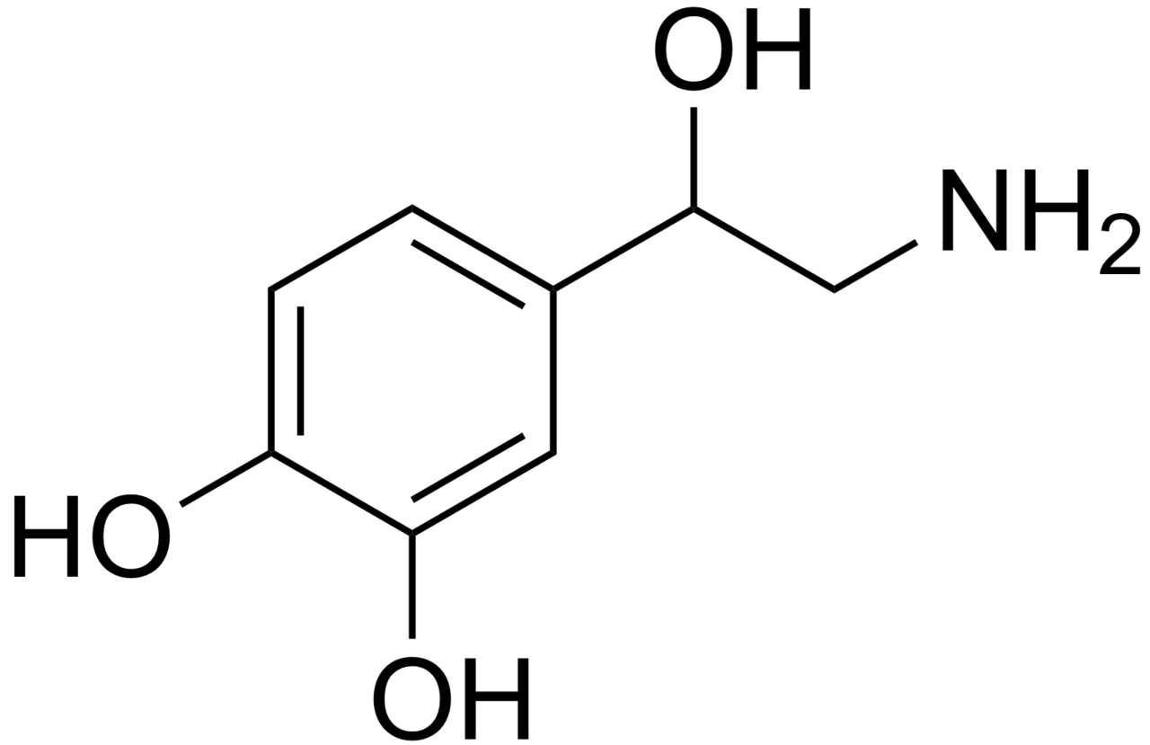 File:Norepinephrine structure.png - Wikipedia