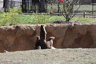 Potawatomi Zoo - Image: North American river otter display Potawatomi zoo